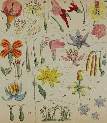 Page 15 de The family flora and materia medica botanica - 1847